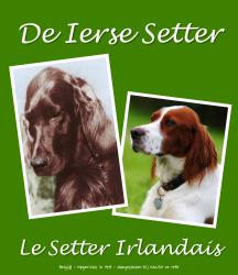 Irish Setter Club Belgium